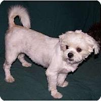 Adopt A Pet :: Powder - San Angelo, TX