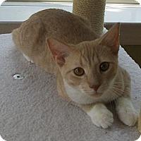 Adopt A Pet :: Bud - Richmond, VA