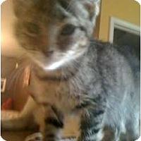 Adopt A Pet :: Rambo - Mobile, AL