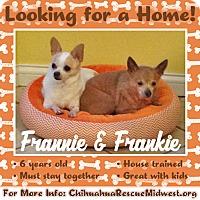 Adopt A Pet :: Frannie - st peters, MO