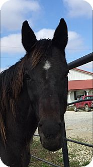Quarterhorse for adoption in Dewey, Illinois - Katie