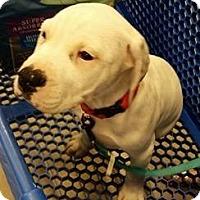 Adopt A Pet :: Zing - Gainesville, FL