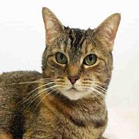 Adopt A Pet :: PENELOPE - Hampton Bays, NY