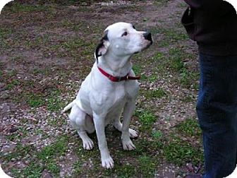 Boxer Mix Dog for adoption in Livingston, Texas - Journey