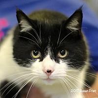 Adopt A Pet :: Dido - Bedford, VA