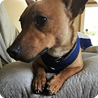 Adopt A Pet :: Joey - Beavercreek, OH
