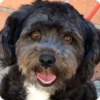 Adopt A Pet :: BAMBI (video) - Los Angeles, CA