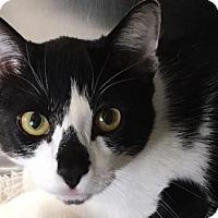Adopt A Pet :: Tux - Prescott, AZ
