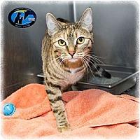 Adopt A Pet :: Pebbles - Howell, MI