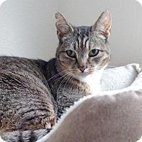 Adopt A Pet :: Bootsie - Alameda, CA