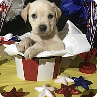 Adopt A Pet :: Mr. Otterton - New Port Richey, FL