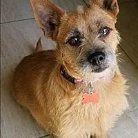 Adopt A Pet :: Paprika - Encino, CA