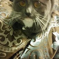 Adopt A Pet :: Aurora - Jerseyville, IL