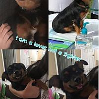 Adopt A Pet :: Rusty - Marlton, NJ