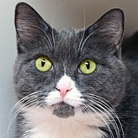 Adopt A Pet :: Frank - Norwalk, CT