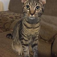 Adopt A Pet :: Lincoln - Morganton, NC