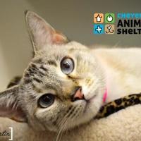 Adopt A Pet :: Jasman - Cheyenne, WY