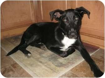 Labrador Retriever/Terrier (Unknown Type, Medium) Mix Dog for adoption in Sneads Ferry, North Carolina - Ava
