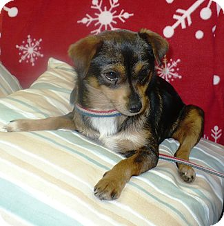 Terrier (Unknown Type, Small) Mix Dog for adoption in Eastpoint, Florida - Lucy