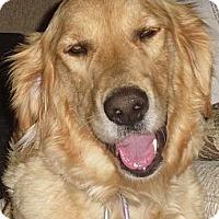 Adopt A Pet :: Gilda - Denver, CO