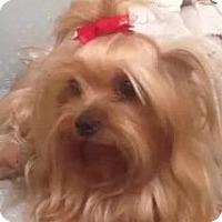 Adopt A Pet :: Peggy Sue - Orange, CA