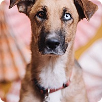 Adopt A Pet :: Bluebell - Portland, OR
