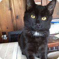 Adopt A Pet :: Jewel - Orinda, CA