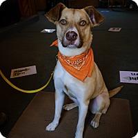 Adopt A Pet :: Jack - Indian Trail, NC