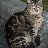 Adopt A Pet :: Kathy - Miami, FL