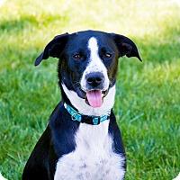 Adopt A Pet :: Amara - Cincinnati, OH