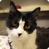 Adopt A Pet :: Rapunzel - Richmond, VA