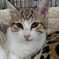 Adopt A Pet :: ASLAN now BO- BO - Pt. Richmond, CA