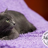 Adopt A Pet :: 2433 - Lake City, MI