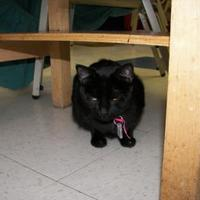 Adopt A Pet :: Little Miss Cherry Street - Thomasville, GA