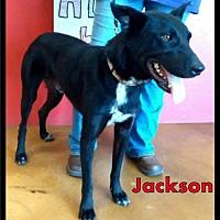Adopt A Pet :: courtesy - Jackson / 2017 - Maumelle, AR