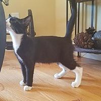 Adopt A Pet :: Gordon Ramsay - San Jose, CA