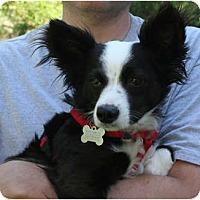 Adopt A Pet :: Holly (aka Billy Holiday) - Concord, CA