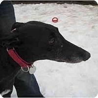 Adopt A Pet :: Jane (Jawa Jane) - Chagrin Falls, OH