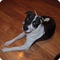 Adopt A Pet :: Jackson - Spring City, TN