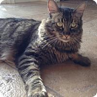 Adopt A Pet :: Saturday - Laguna Woods, CA