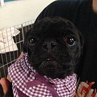 Adopt A Pet :: Emma - Gardena, CA