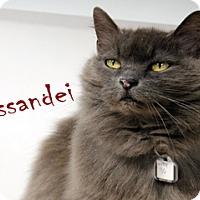 Adopt A Pet :: Missandei - Hamilton, MT