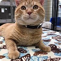 Adopt A Pet :: Spencer - Maryville, MO