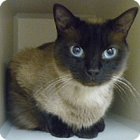 Adopt A Pet :: Neero - Hamburg, NY