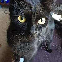 Adopt A Pet :: Mow Mow - Columbus, OH