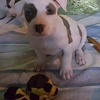 Adopt A Pet :: Theodore - Sharon Center, OH