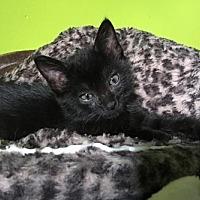 Adopt A Pet :: Lilly - Elizabethtown, PA