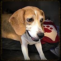 Adopt A Pet :: Snoopers - Los Alamitos, CA