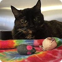 Adopt A Pet :: Tickles - Bridgewater, NJ