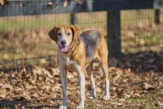 Hound (Unknown Type) Mix Dog for adoption in Ravenel, South Carolina - Jenny
